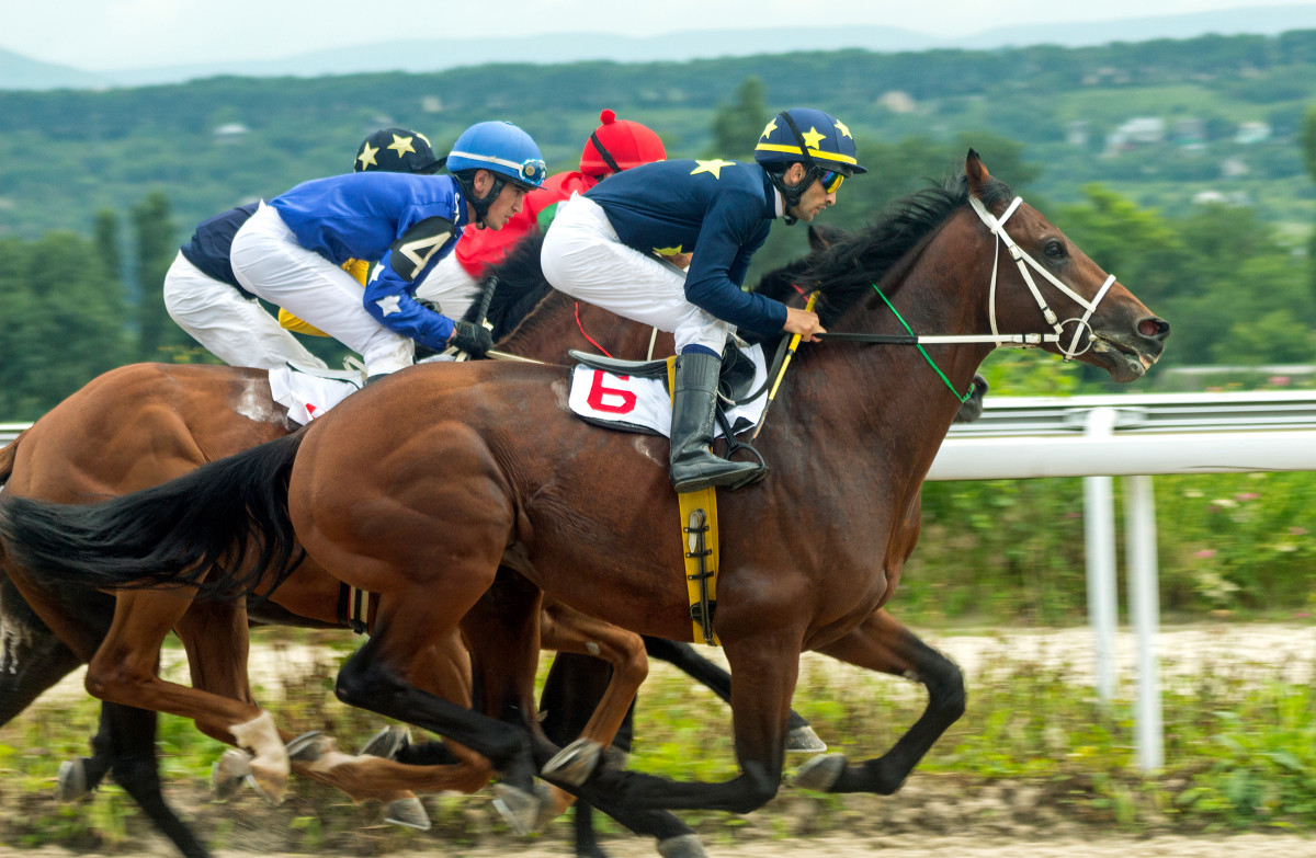 4 Jenis Kuda Pacuan Yang Biasa Digunakan Di Pertandingan