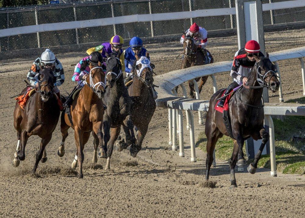 2 Metode Mendapatkan Kuda Pacuan