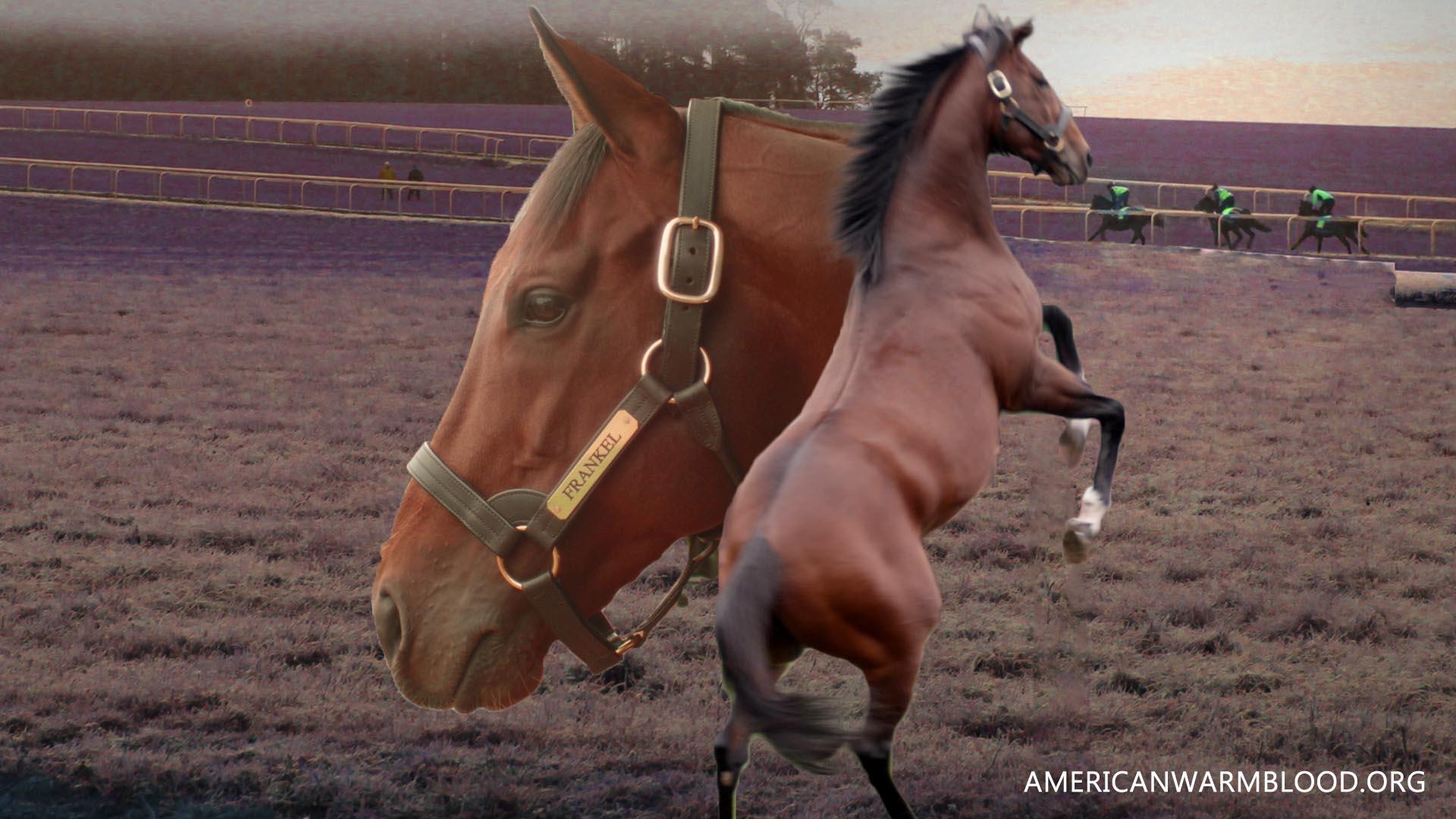 Mengenal Frankel Kuda legendaris juara kuda pacu British Thoroughbred