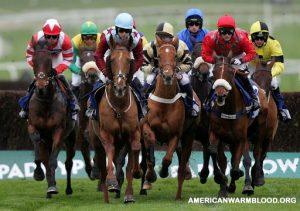 Mengenal Lebih Jauh Olahraga Pacuan Kuda