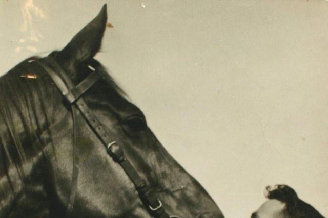 Phar Lap juara kuda pacuan keturunan Selandia Baru