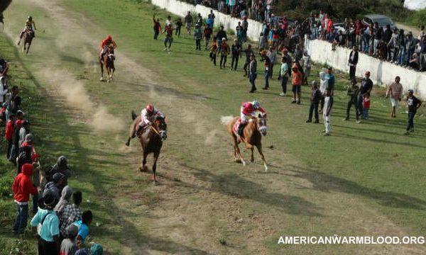 Pordasi Adakan Kompetisi Nasional Pacuan Kuda di Yogyakarta