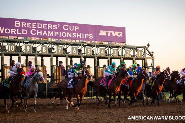 3 Kuda Pacu yang berpeluang menenagkan kejuaran Breeders' Cup