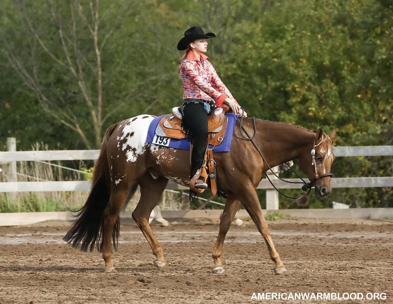 Jenis Gaya Berkuda Barat dan Bibit Kuda yang Cocok