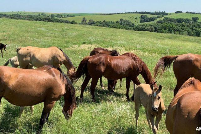 Peningkatan Berkelanjutan dalam Peternakan Kuda Di Linwood Ranch