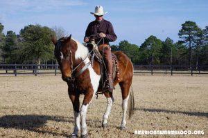 Penunggang Kuda Terpopuler di Dunia