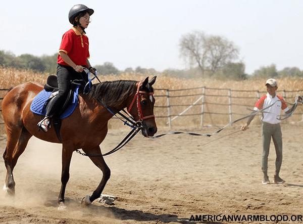 Teknik- Teknik Dasar dalam Menguasai Berkuda Khususnya Kuda Pacu
